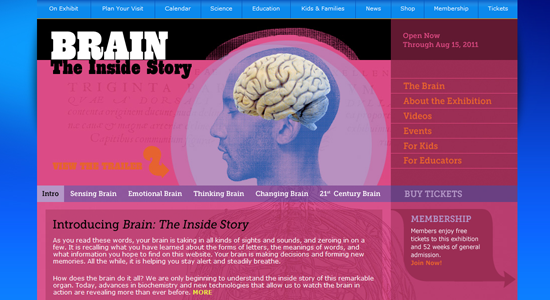 Brain: The Inside Story | American Museum of Natural History